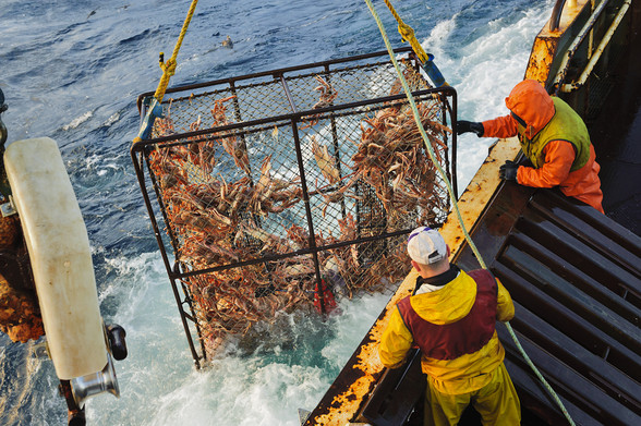 Bering Sea Opilio Commercial Fishery on the F/V Arctic Hunter, winter, Alaska.