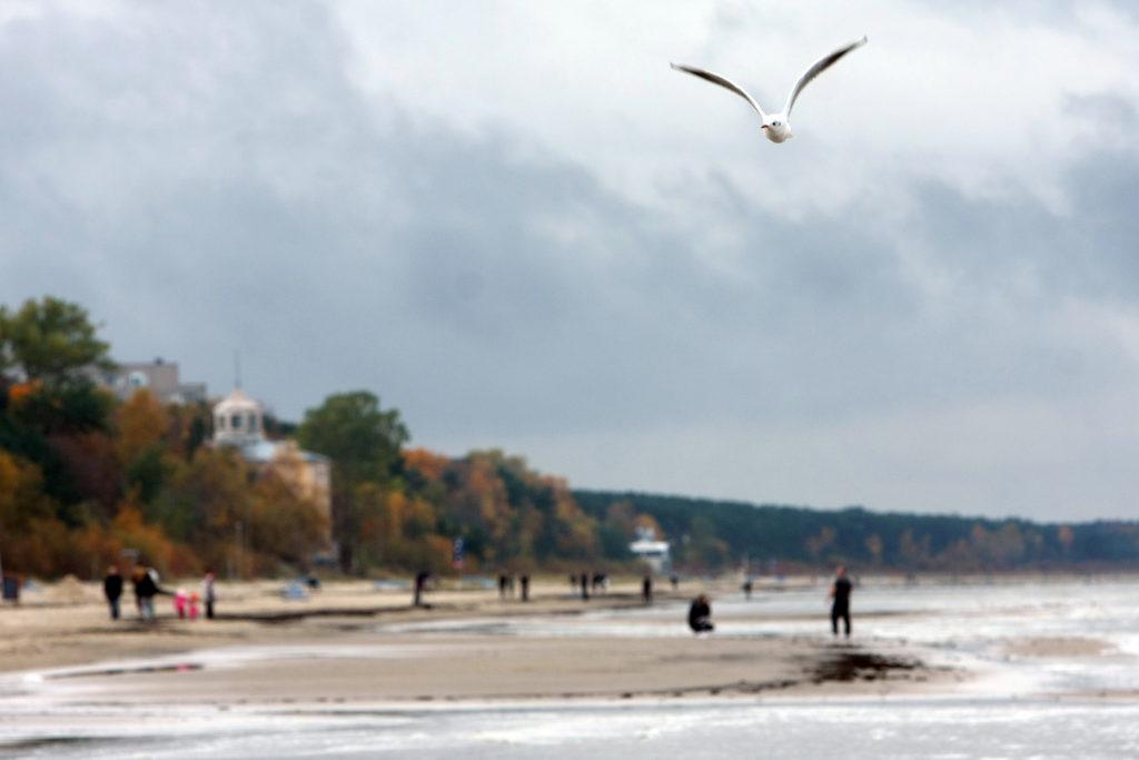 Majoru pludmale rudenī.