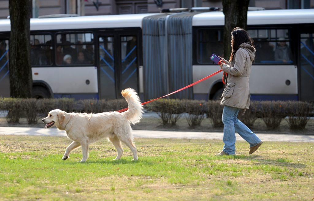 Jauniete pastaigā ar suni apstādījumos pie Mākslas muzeja.